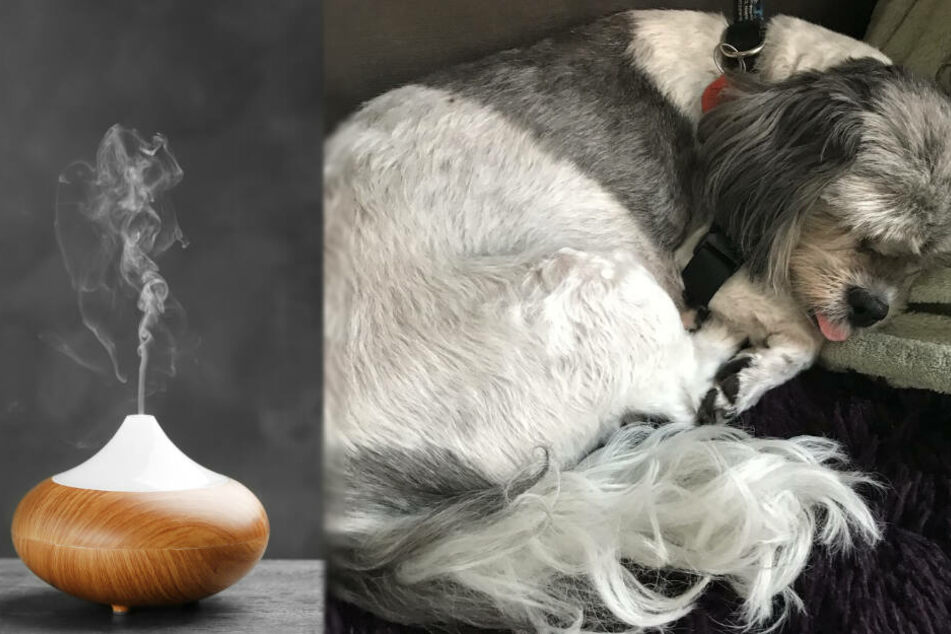 Eine Hund wurde vergiftet, nachdem das Frauchen einen neuen Lufterfrischer in Betrieb genommen hatte.