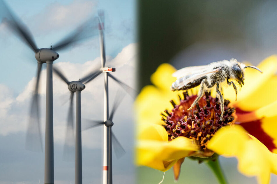 Bienen, Käfer und Co: Windräder töten täglich Milliarden Insekten