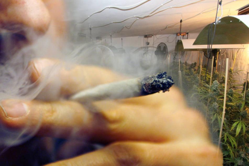 Die Beamten fanden 18 Kilogramm verkaufsfertiges Marihuana (Montage).