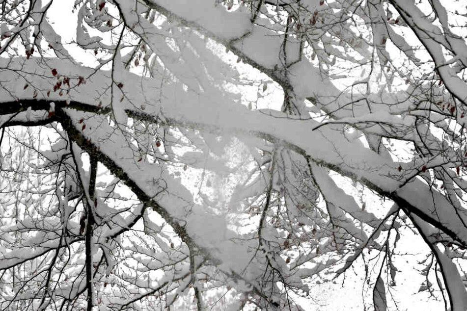 Der viele Schnee hatte einen Baum an der Strecke zum umfallen gebracht. (Symbolbild)