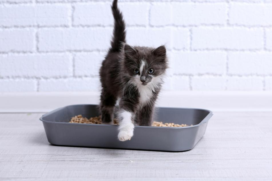 Normalerweise urinieren die reinlichen Katzen nur ins Katzenklo.