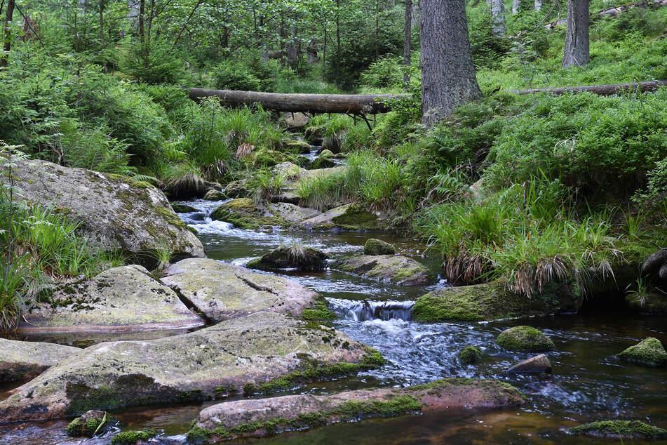 Mehr Schein als Sein: Wenn Bäche eine naturnahe Gewässerstruktur haben, müssen sie nicht automatisch gesund sein.