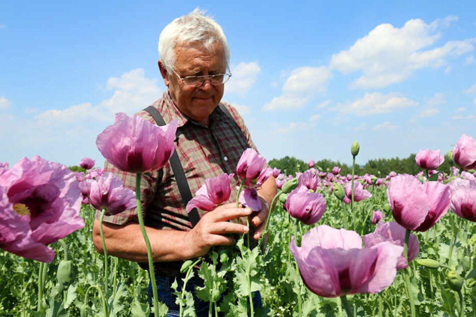 Landwirt Stephan Stiegler (66) ist einer der wichtigsten Mohnproduzenten  Deutschlands.