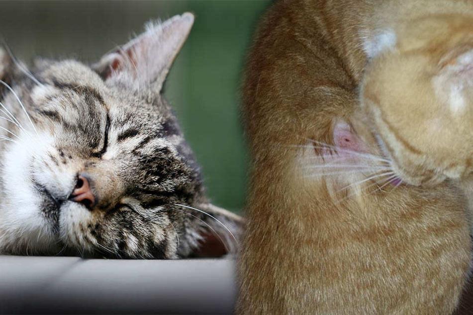 Tierhasser schießt mit Gewehr auf Katzen