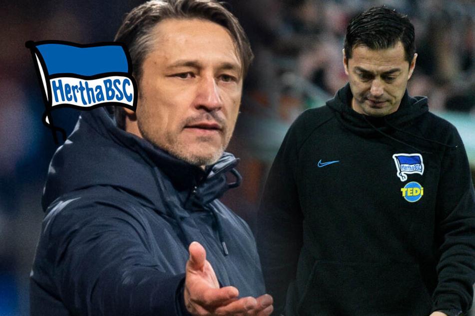 Hertha-Coach Covic vor dem Aus: Kommt Niko Kovac?