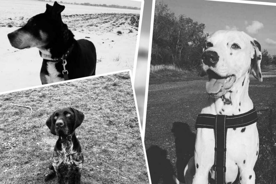 Mit einem emotionalen Post hat das Tierheim Delitzsch an seine Schattenhunde erinnert.