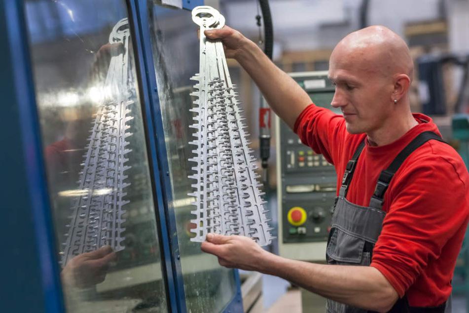 Aber vorsichtig, bitte! Mitarbeiter Torsten Schmidt (43) prüft geschärfte  Schneidmesser für eine Heckenschere.