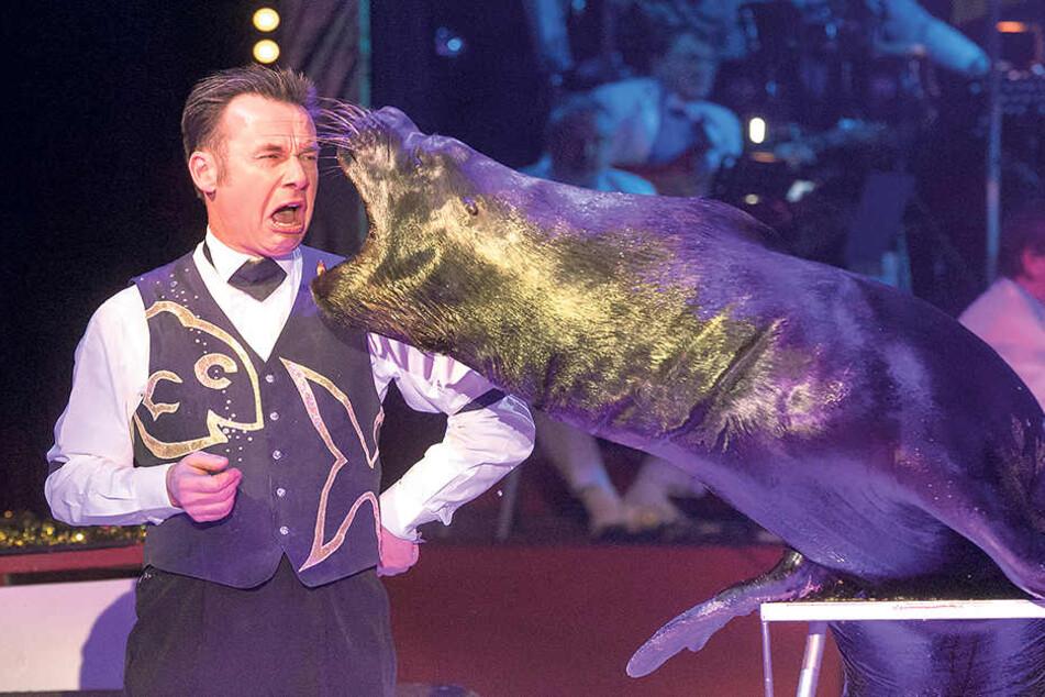 Über den Mundgeruch seines Seelöwen Lappy rümpft Tiertrainer Ingo Stiebner  die Nase.