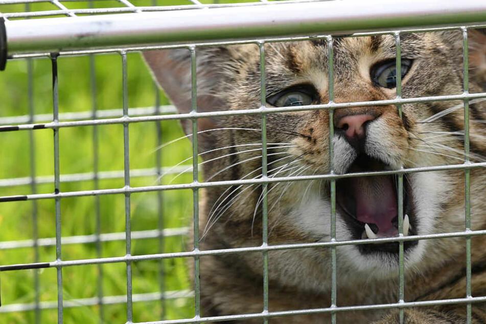 Mehrere Katzen-Besitzer in Sorge: Hat ein Mann ihre Lieblinge eingefangen?