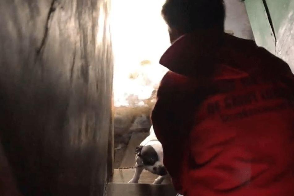 Angekettet befand sich ein Hund im Keller.