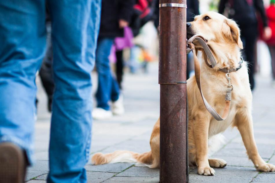 Auch wenn sie ihn nur streicheln wollen: Wenn fremde Menschen direkt auf einen Hund zugehen, kann er sich bedroht fühlen und ängstlich reagieren.