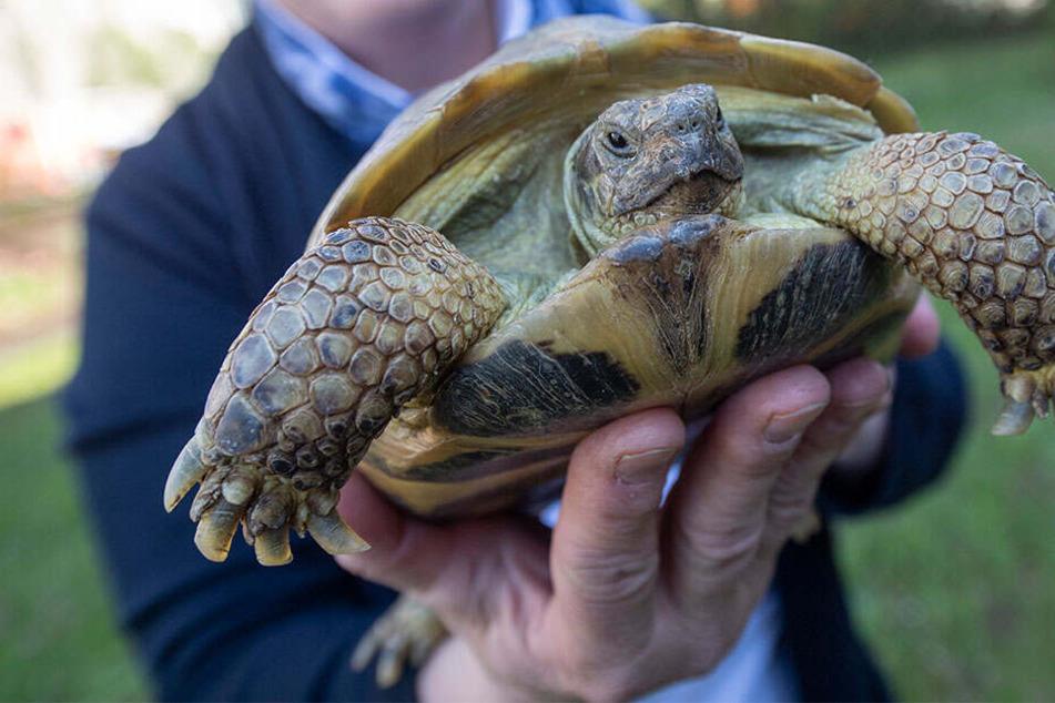 Die clevere Schildkröte entkam den Flammen und starb entgegen erster Meldungen nicht. (Symbolbild)
