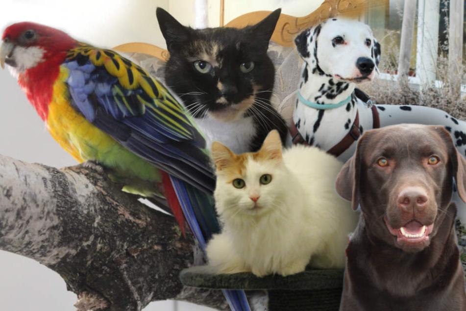 5 besondere Tiere: Hunde, Katzen und ein Papagei suchen endlich ein Zuhause