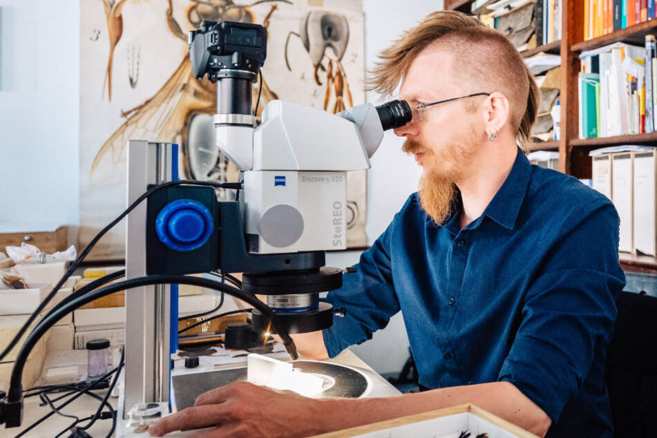 100 Millionen Jahre alt! Forscher entdeckt neue Tier-Gattung