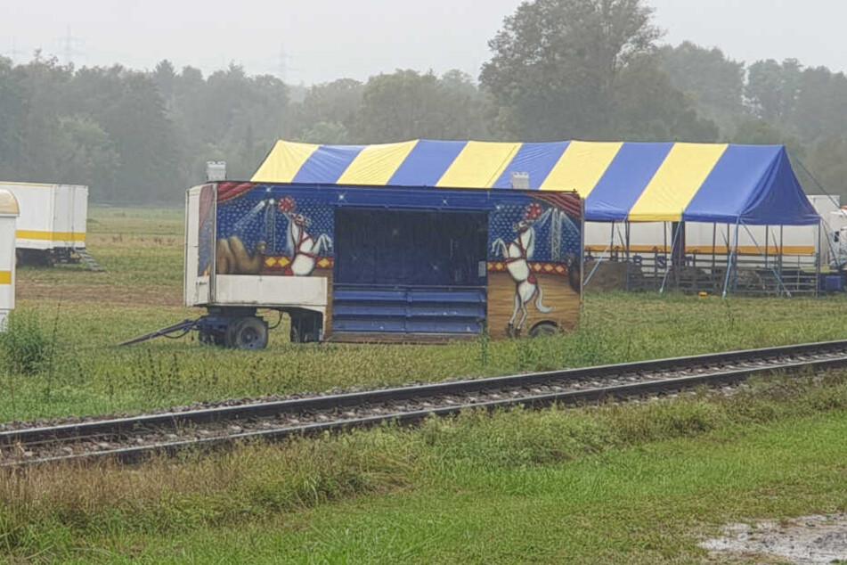 Die Tiere sind wohl von dem Zirkus ausgebüxt.