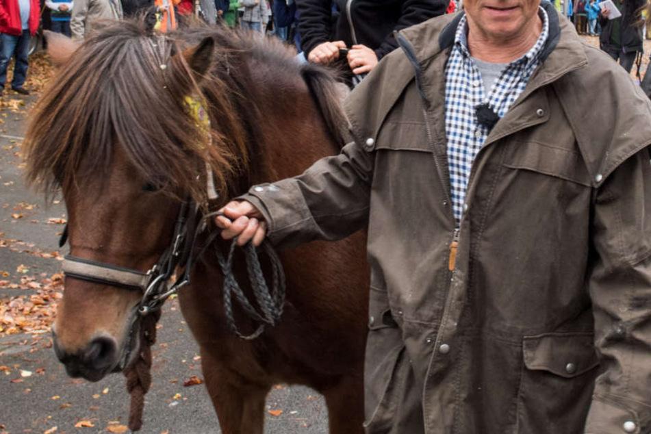 Der Mann wollte ein Pferd an der Straße entlang führen und wurde angefahren. (Symbolbild)