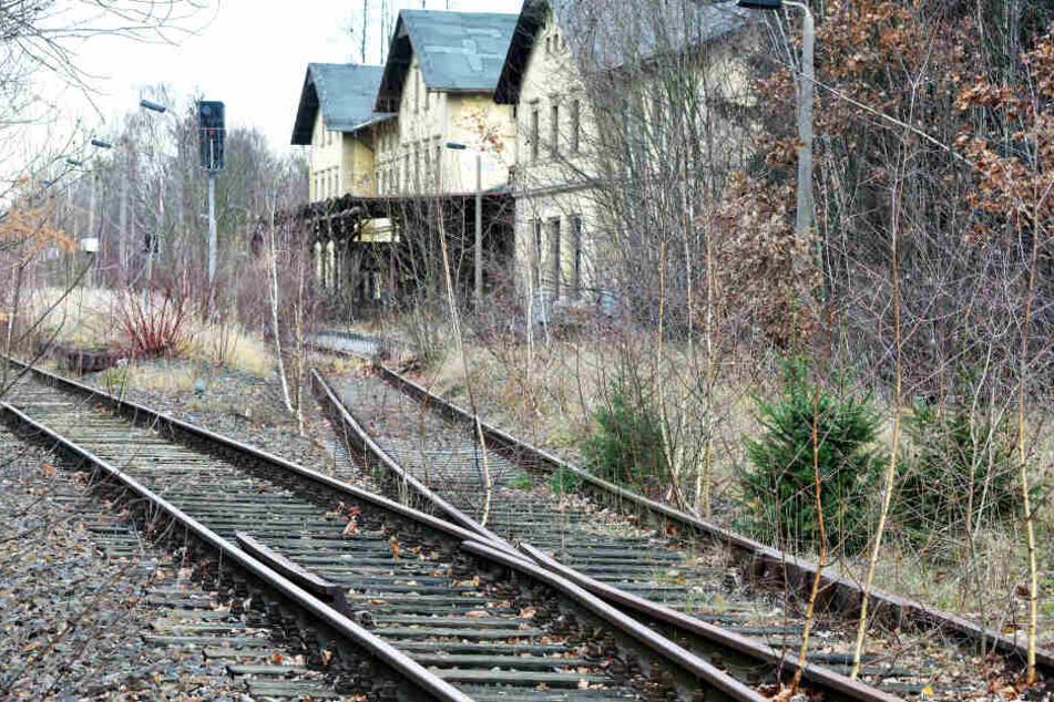 Ehe die Züge hier rollen können, geht's den Birken an den Kragen.