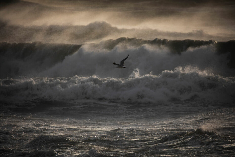Eine Möwe überfliegt das tosende Mittelmeer bei starkem Wind in Barcelona. Der staatliche Wetterdienst Aemet meldet Rekordwellen.