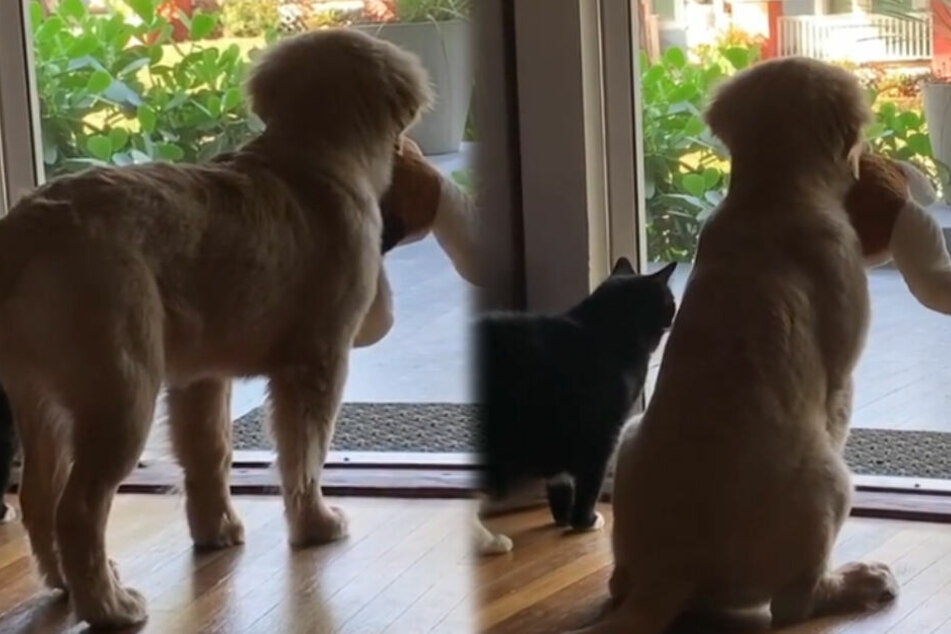 Warum schauen Hund und Katze hier gemeinsam aus dem Fenster?
