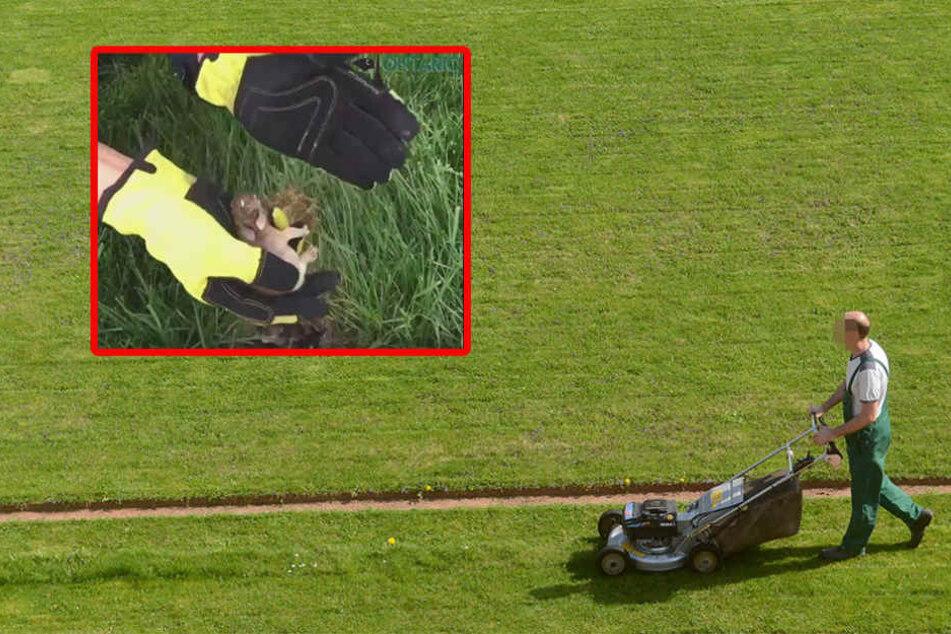 Lebensgefahr: Das müsst Ihr beachten, wenn Ihr Euren Rasen mäht