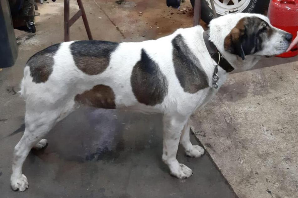 Hund verbringt Nacht auf dem Polizeirevier, doch was hat er verbrochen?