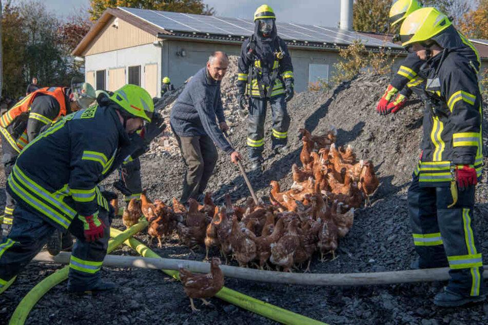 5000 Hühner verendeten qualvoll in den Flammen, einige überlebten.