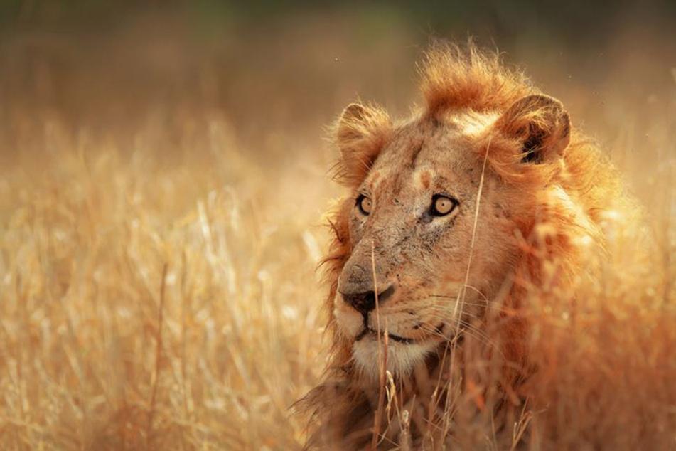 """""""Faszination Afrika"""" ist eine Hommage an der südliche Afrika."""