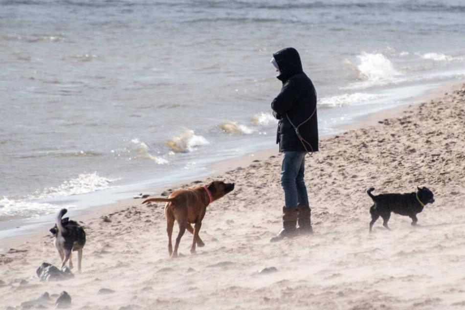 Eine Frau geht mit ihren Hunden bei stürmischem Wetter an der Elbe spazieren.