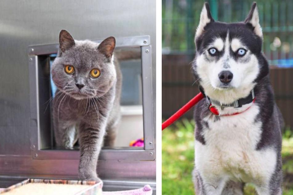 Kater Püppi und Hundedame Anouk leben jetzt im Tierheim.