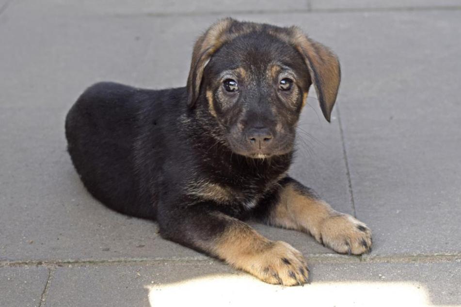 Auch Sky gehört zu den geretteten Hunden.