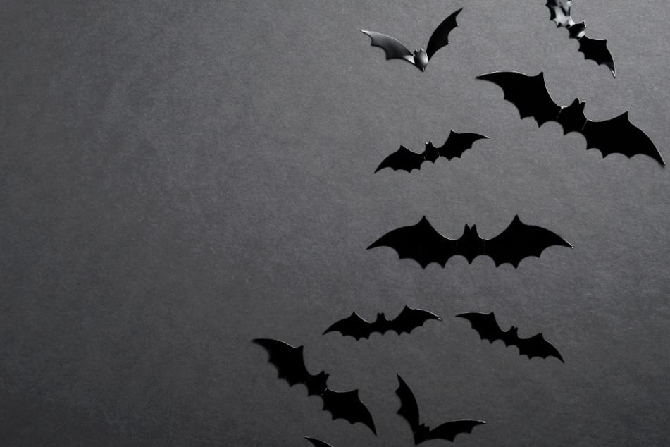 Dunkle Mächte am Werk? Coach beschuldigt Gegner wegen toter Fledermaus der Hexerei!