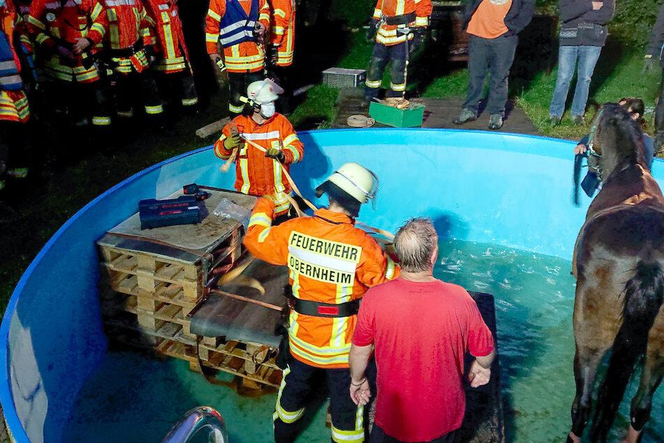 Einsatzkräfte der Feuerwehr kümmern sich 2020 um ein Pferd, das losrannte, mehrere Absperrungen einer Koppel durchbrach und in einem Gartenpool bei Obernheim landete.