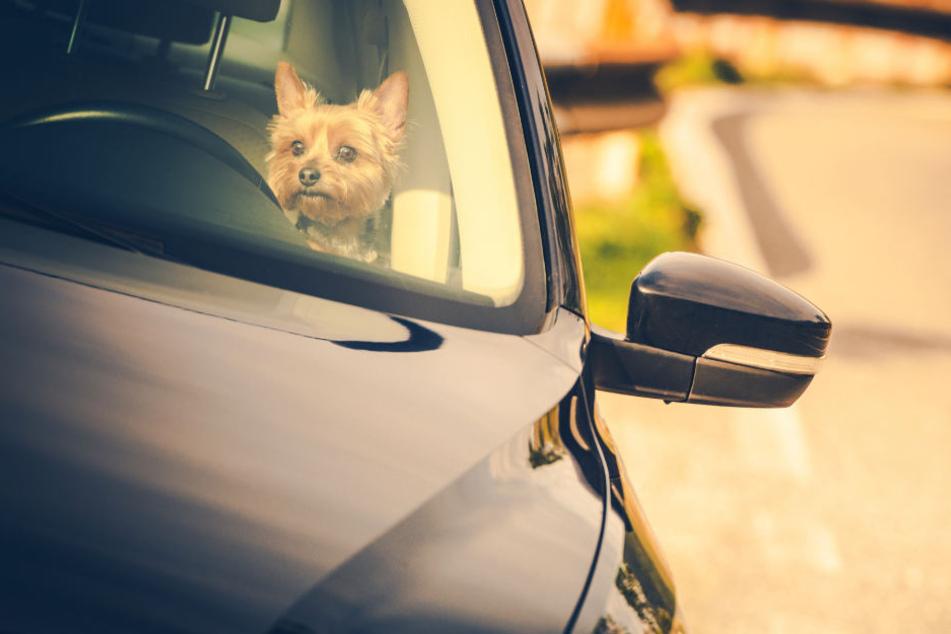 Als die Beamten den Hund vorfanden, reagierte dieser kaum noch.