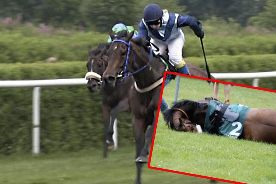 Die Peta spricht sich gegen Pferdewetten aus. (Symbolbild)