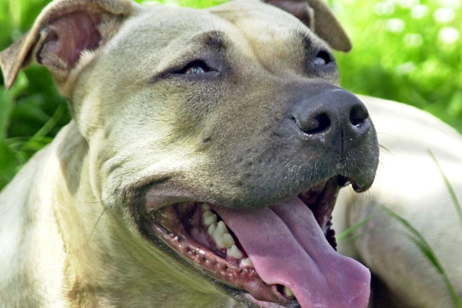 Aggressive Hunde-Attacke! Mann flüchtet auf Baum