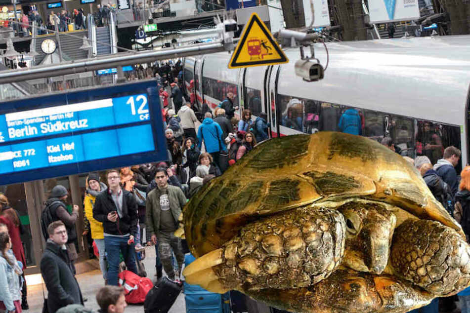Schildkröte in Hauptbahnhof verschollen, Bundespolizei musste helfen
