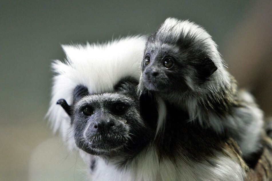 Auf dem Schwarzmarkt zahlen Sammler hohe Summen für exotische Tiere. (Symbolbild)