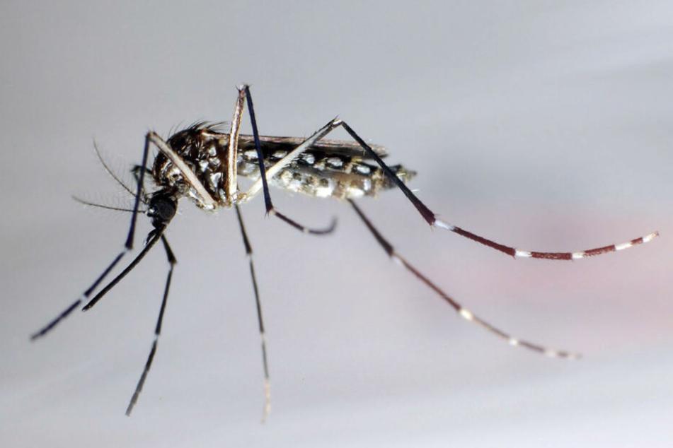Dengue-Fieber greift in Süd- und Mittelamerika um sich