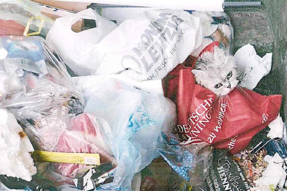 In einen roten Stoffbeutel eingeschnürt fand der 25-Jährige das Tier in einemMüllcontainer.