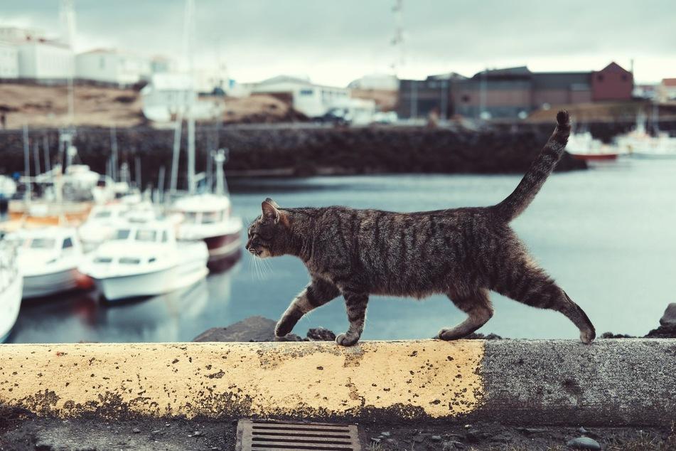 Katzen benötigen so manche Anreize, um gerne wieder nach hause zu kommen.