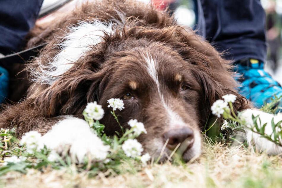 Alle Hunde in Niedersachsen sollen im offiziellen Melderegister erfasst werden.