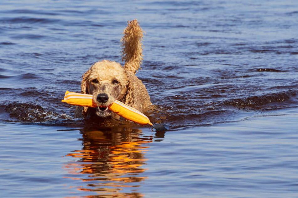 Manche der Dummies schwimmen und ermöglichen dadurch ein Training im Wasser.