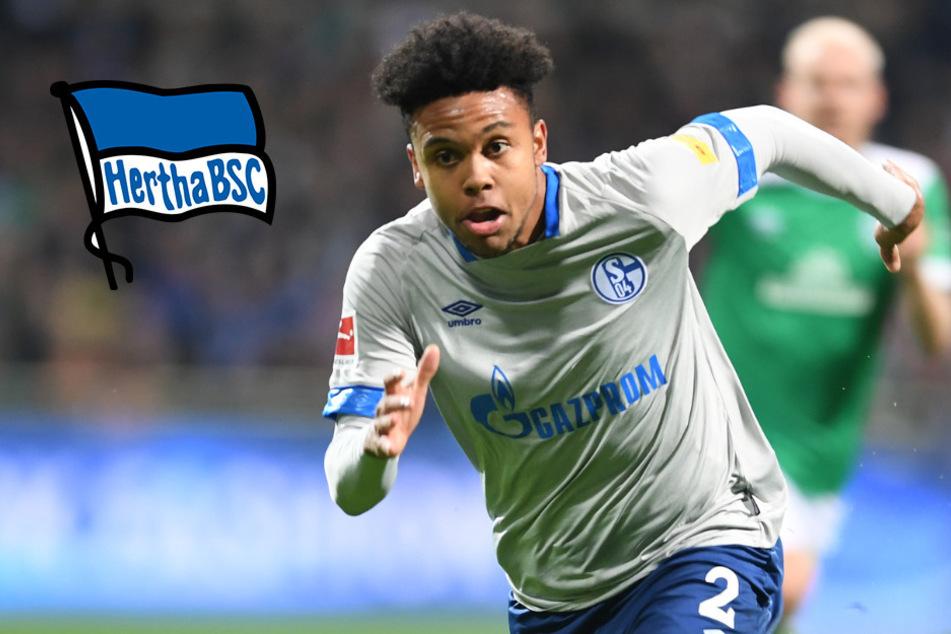 Schnappt sich Hertha Schalke-Star McKennie?