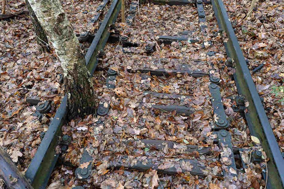 Die Natur hat sich in den Jahrzehnten der Stilllegung die Trasse zurückerobert.