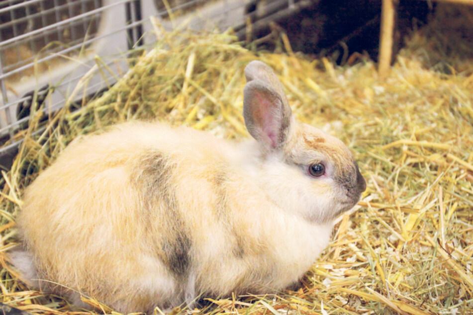 Das Tierheim beherbergt auch etliche Hasen.