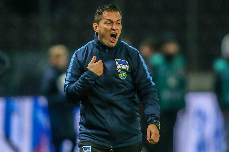 Hertha-Trainer Ante Covic kann die Schiedsrichter-Entscheidung nicht nachvollziehen.