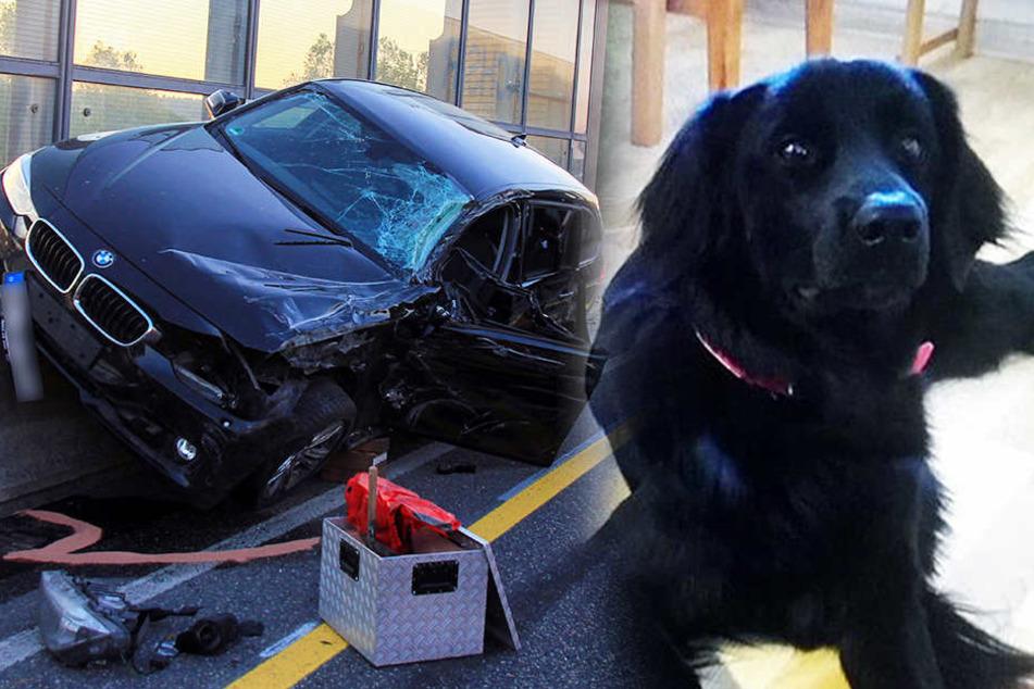 Die süße Therapiehündin Arisha floh nach dem Unfall auf der A4.