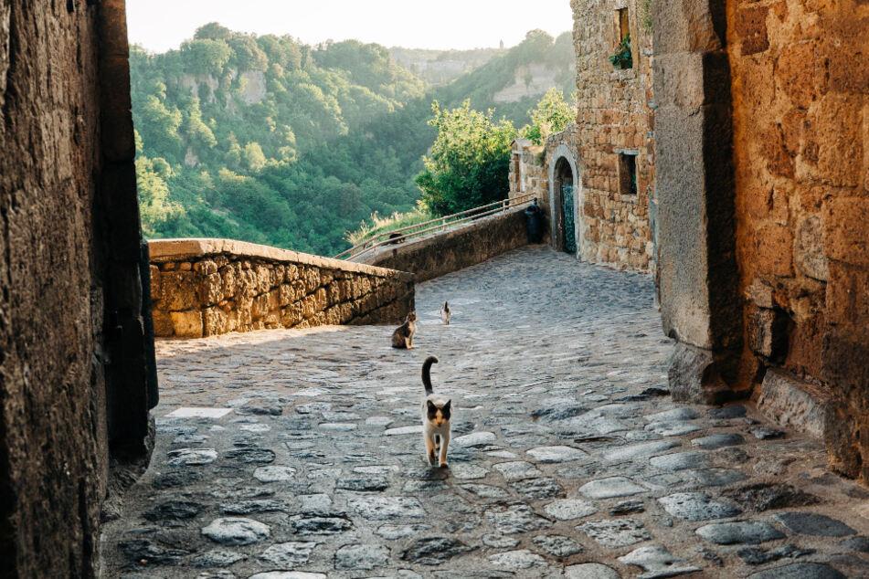 Freilebende Katzen gehören zum Stadtbild von Rom einfach dazu.