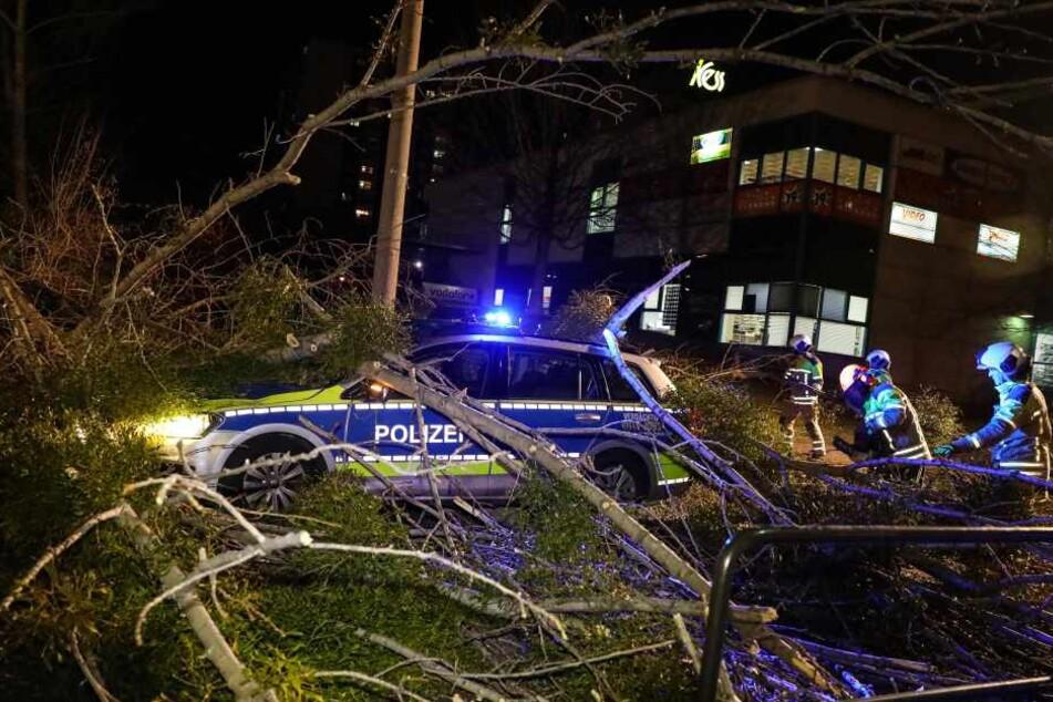 In Dresden krachte ein Baum auf einen Polizeiwagen. Ein Polizist wurde verletzt.