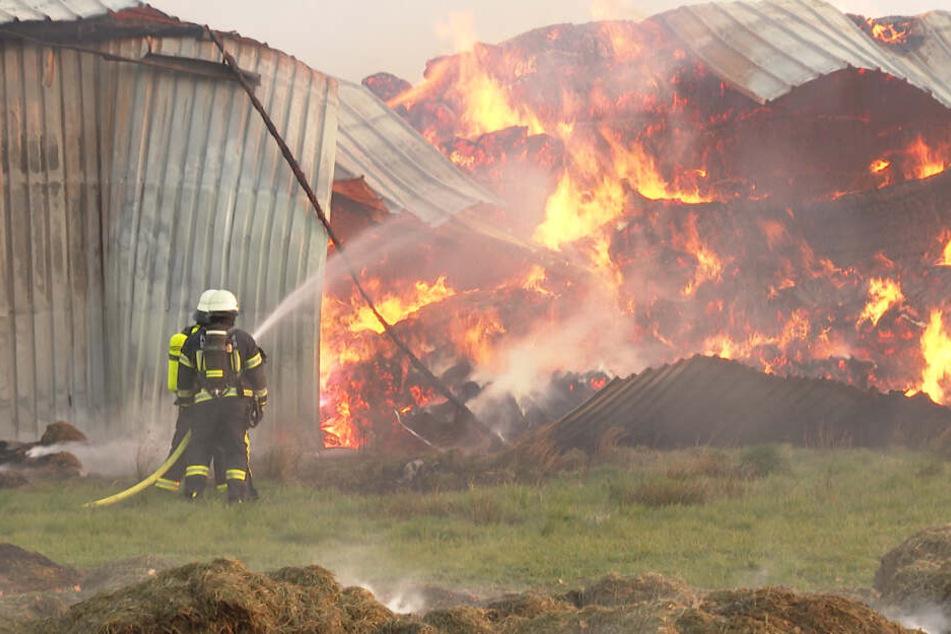 Feuerwehrleute kämpfen gegen das meterhohe Feuer.
